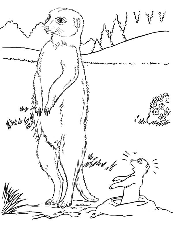 Best Meerkat and Baby Coloring Page