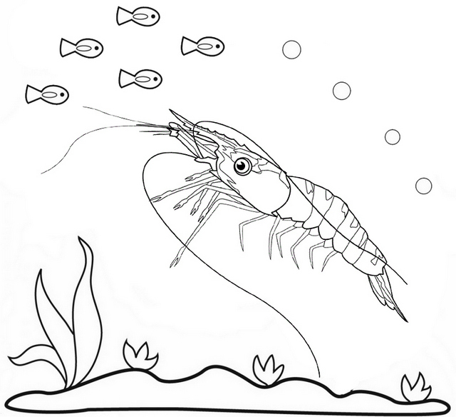 Best Shrimp Coloring Page
