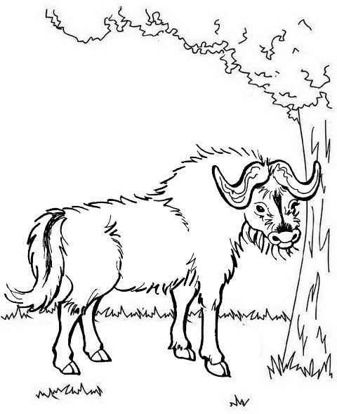 Best Yak and tree coloring page
