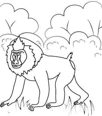 Cute Baboon Cartoon Coloring Page