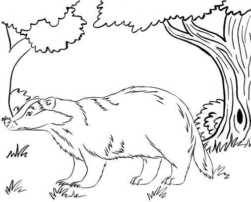 Forest Animal Badger Coloring Page