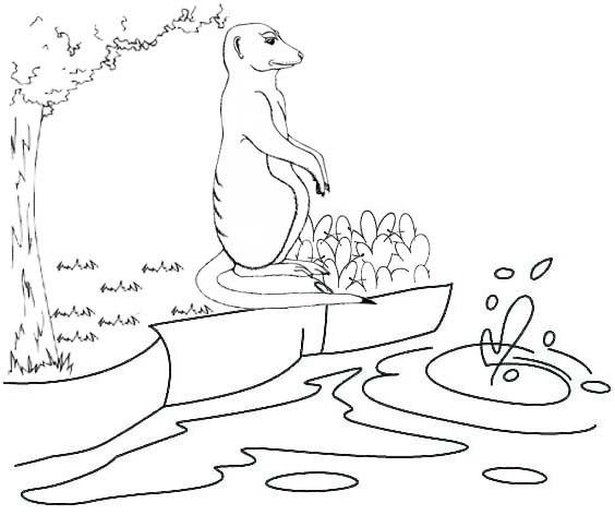 a meerkat and river in the jungle coloring page