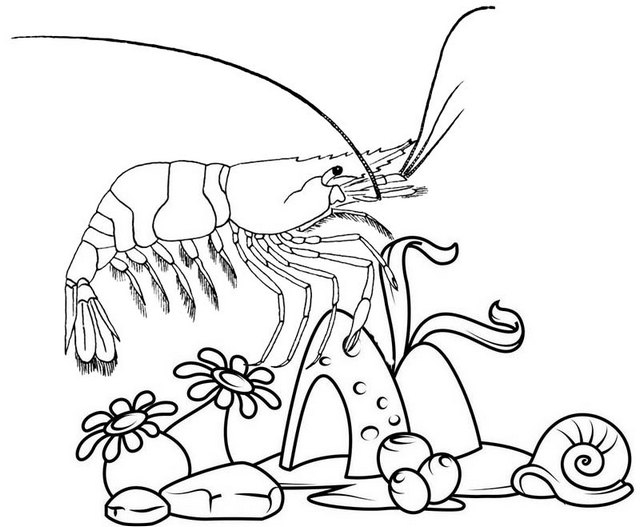 beautiful shrimp undersea creature coloring page