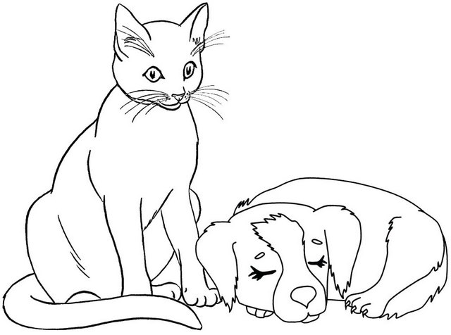 cat gets a sleeping dog coloring page