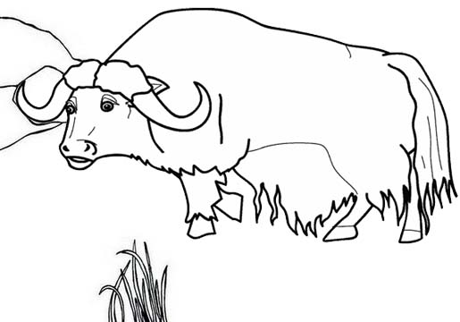 semi realistic Yak coloring page