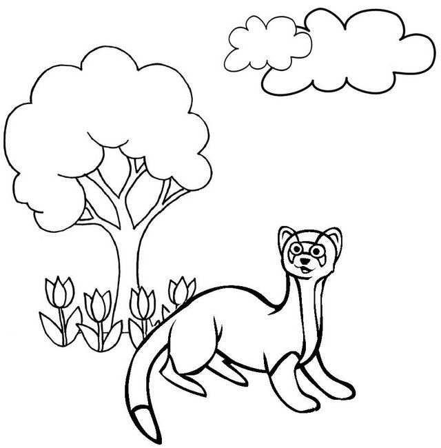 Best Ferret Coloring Page