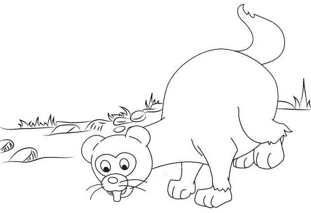 Cute Ferret coloring page