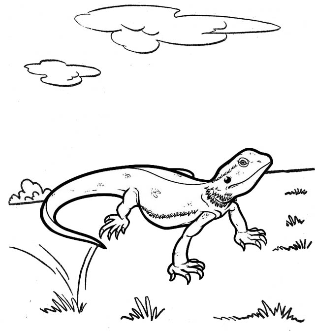 Best Lizard Coloring Page