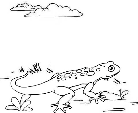 Fun Lizard Coloring Page