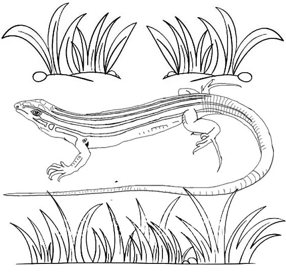 Realistic Lizard Coloring Page