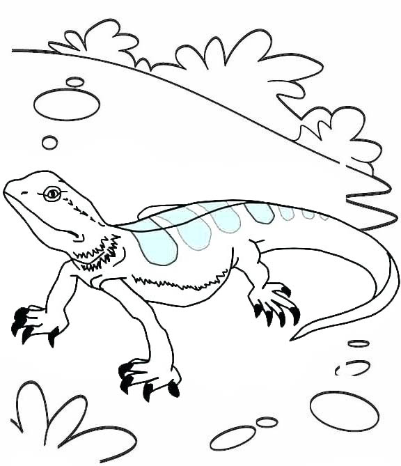 Top and Beautiful Color Lizard Coloring Page