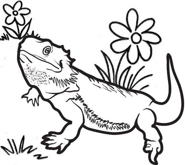 high detailed lizard coloring page