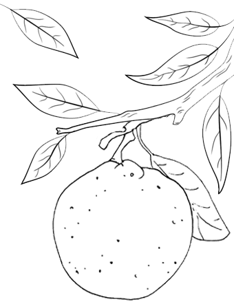 Orange Fruit with Plant Coloring Page